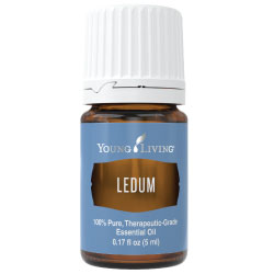 Ledum Essential Oil - 5 ml